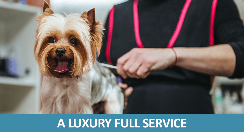 Full Groom For Dogs Near Christchurch